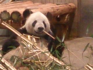 謎?解き散策婚活イベント・上野動物園