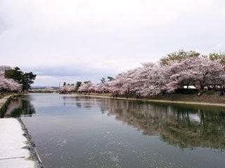 第2回 【京都宇治】お花見しながら出会える3時間