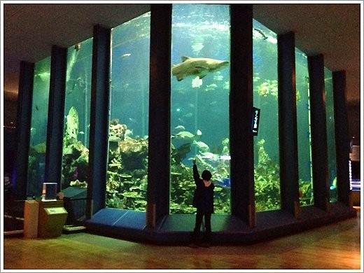 20代30代東海大学海洋科学博物館散策
