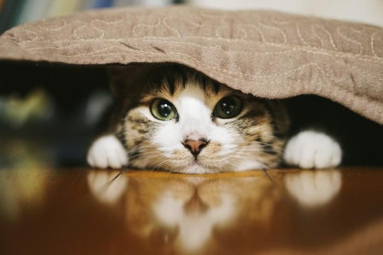 30代40代中心 猫好き飲み会 秋葉原