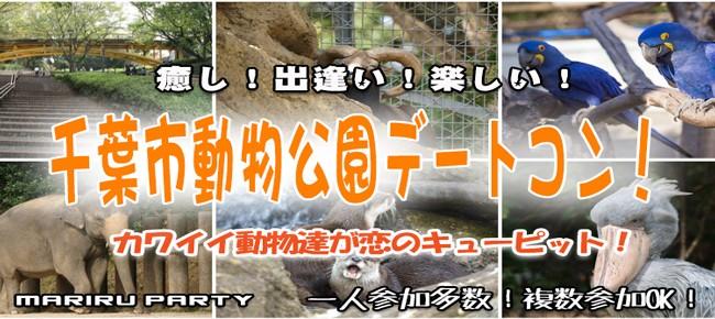 可愛い過ぎるレッサーパンダが大人気♡千葉市動物園デートコン☆