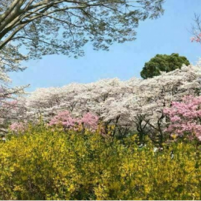 公園の桜並木が素敵♡