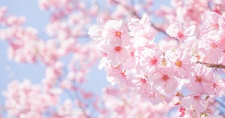 お花見&ピクニックワイン会@名城公園
