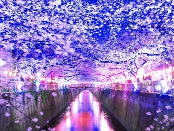 3/26 目黒 目黒川夜桜ウォーキング街コン