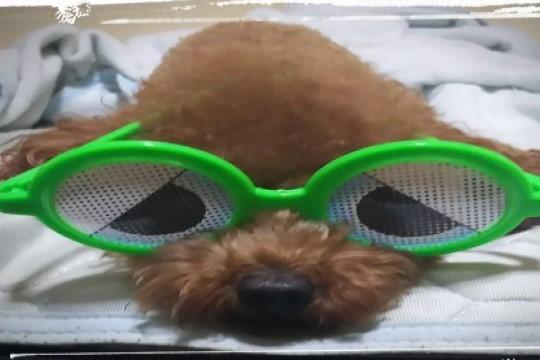 15時★ワンワン会★犬好き集合ー出会い飲み会!150分