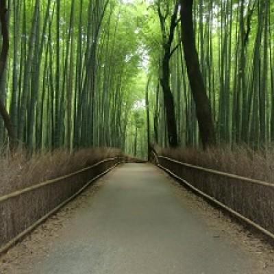 竹林の道の散策や、縁結びの野宮神社を参拝。
