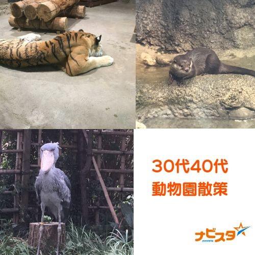 30代40代中心 千葉市動物園出会い散策