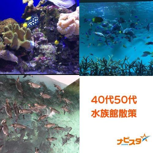 40代50代葛西臨海水族館出会い散策