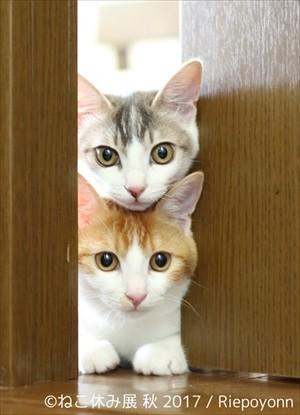 ペット・動物好き(犬・猫)編