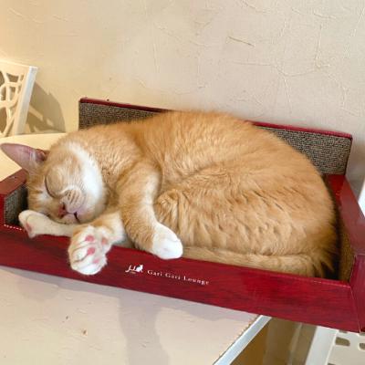可愛い猫ちゃんたちに癒されますよ☆