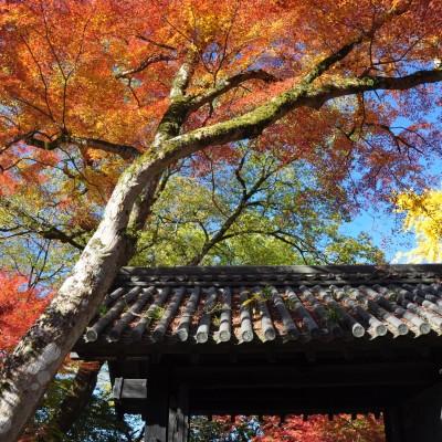 大岩山中にそびえる関東最古の大岩毘沙門天