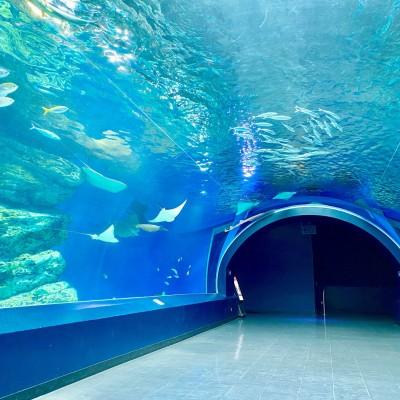 水槽のトンネルです♡ @アクアパーク品川