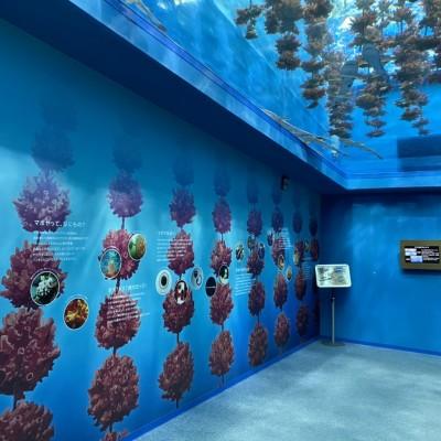 カップルにも大人気の雰囲気バッチリな水族館です♡
