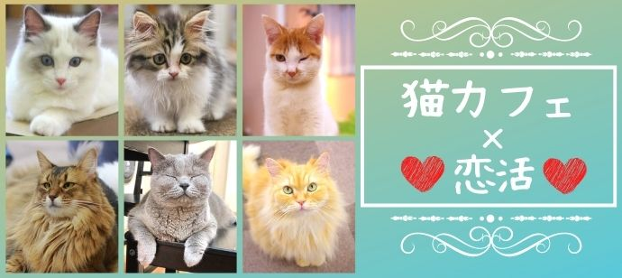 【猫カフェ婚活♪】3か月以内に恋人が欲しい男女★にゃんこと癒しのひと時を♪@横浜