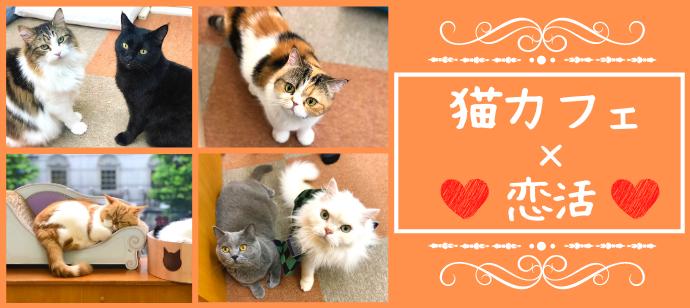 【猫カフェ婚活♪】3か月以内に恋人が欲しい★猫ちゃんと戯れながらまったり婚活@恵比寿