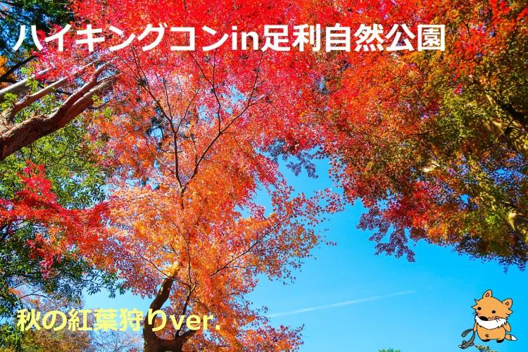 精神修行(´д`)ハイキングコンin足利自然公園 紅葉狩りver